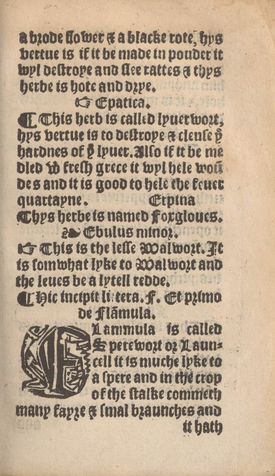 This page uses a variety of typographical signals to set off the titles and accounts of the different herbs. From top to bottom you can see a fist, capitulum, fleuron, another fist and capitulum, and an initial letter.