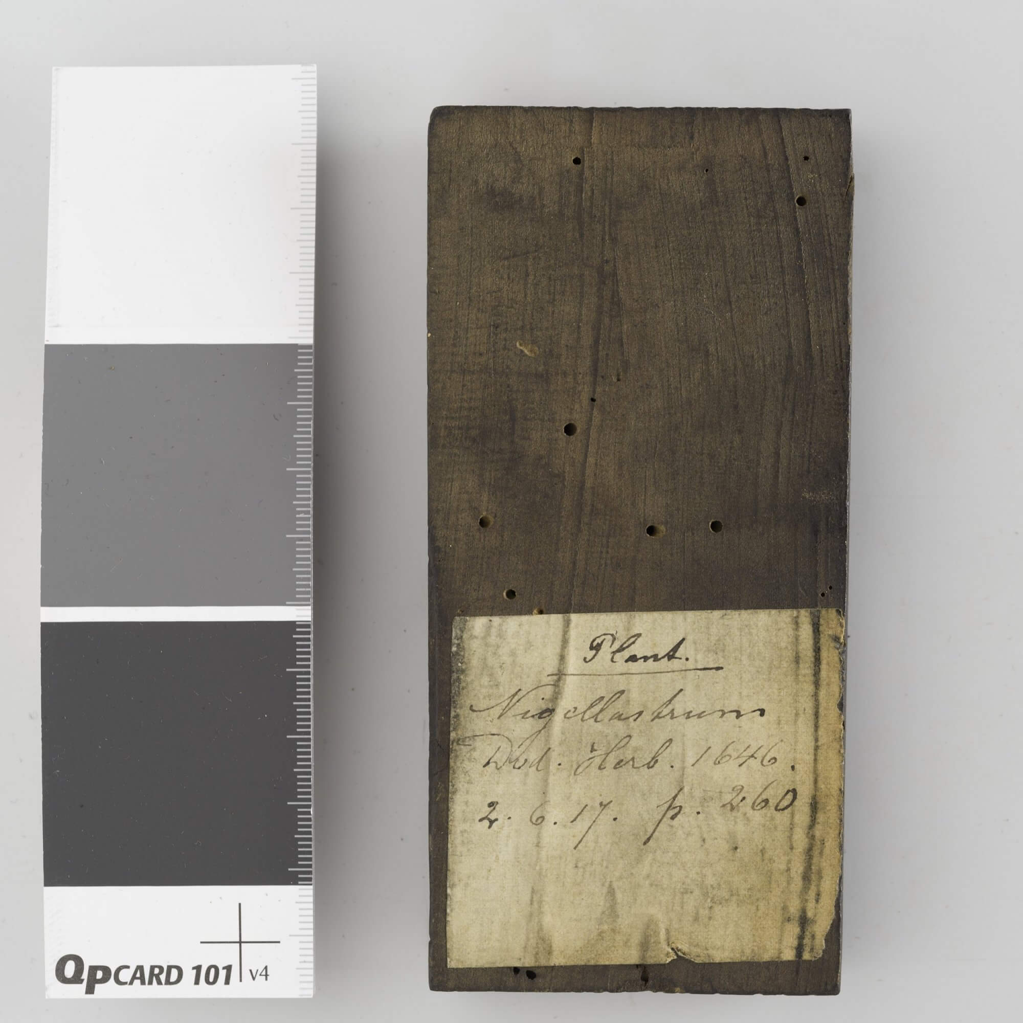 At some point in its history as part of the Plantin Moretus press, a paper label was affixed to the back of this woodblock in order to identify it.